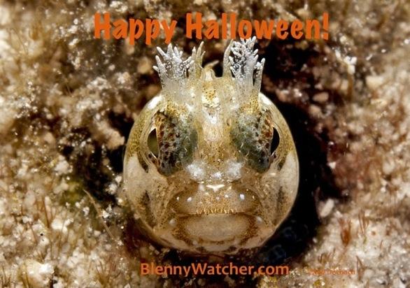 Halloween Blenny