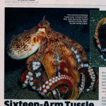 Thumbnail image for Sixteen-Arm Tussle article