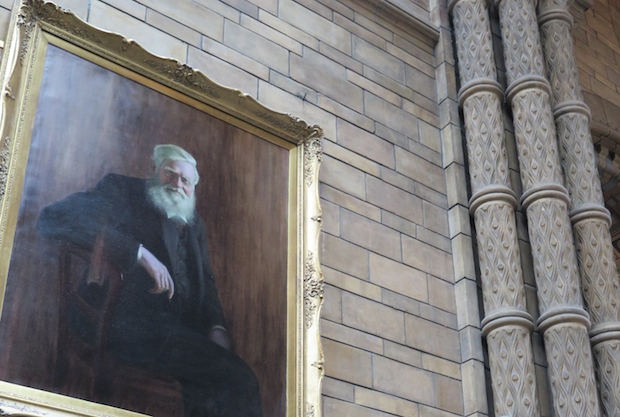 Alfred Russel Wallace portrait hangs just to Darwin's left in the great hall