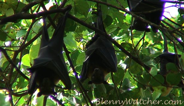 Bats Anna DeLoach BlennyWatcher.com