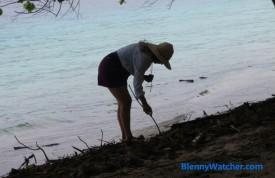 Beachcombing: PIcking through the wrack BlennyWatcher.com