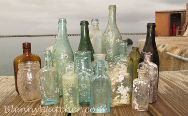 Bermuda Bottles Anna DeLoach BlennyWatcher.com