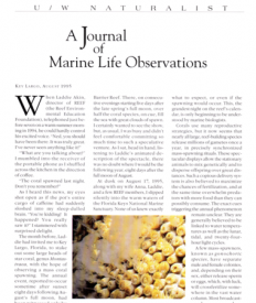 Coral Spawning 1996 BlennyWatcher.com