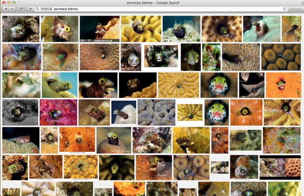 "November 2014: A Google image search for ""secretary blenny"" yields mostly misidentified fish."