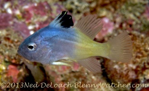 Soapfish Tales