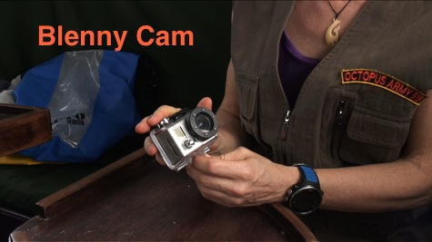 blennycam photo for blog