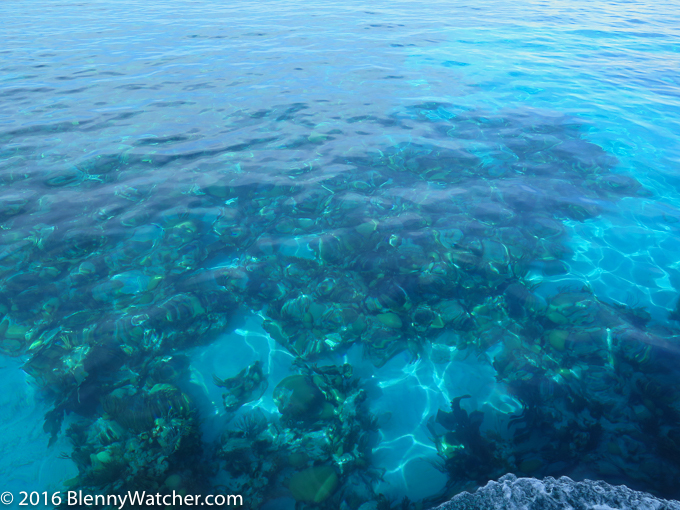 Clear, calm October 2016 waters of Bermuda