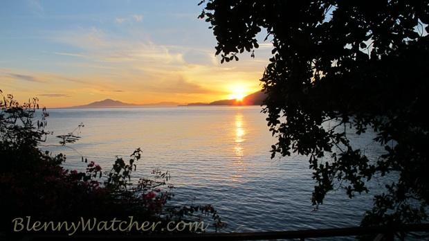 Manado Sunrise BlennyWatcher.com