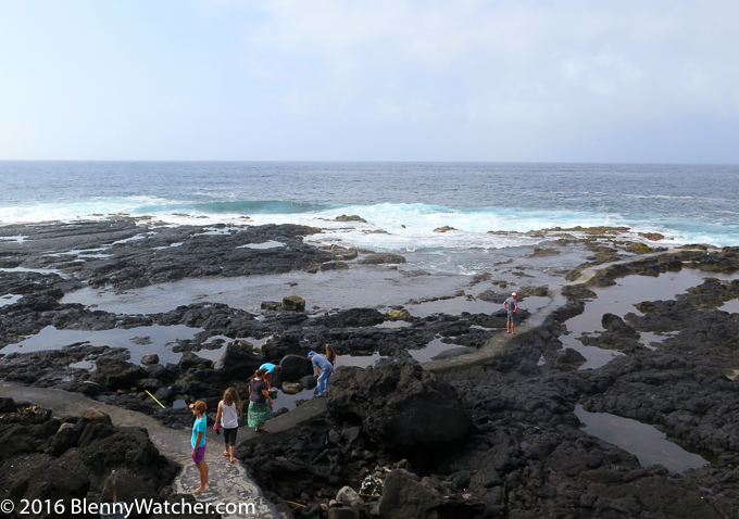 Tidepooling in the Azores - Blennywatcher 2016 Review
